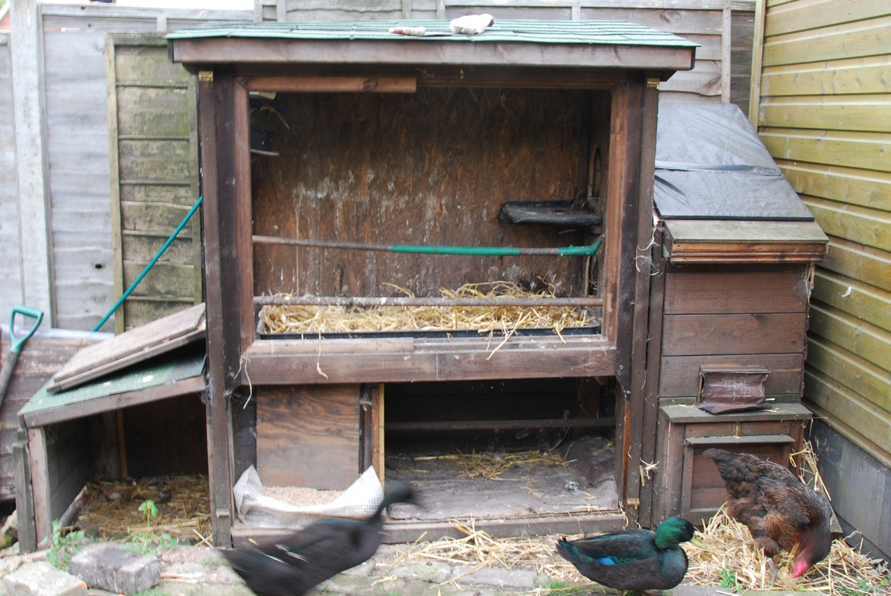 Chicken House how to fully automate your chickens - siblify. handcrafted